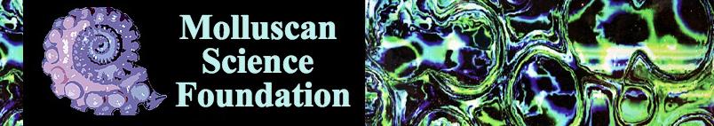 Molluscan-Science.net Galleries